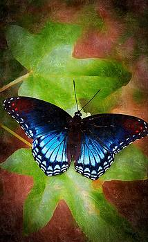 Butterfly by Paul Wilford