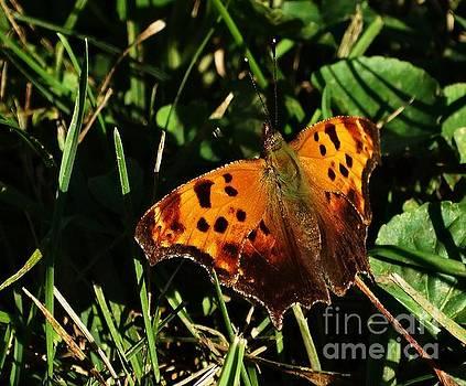 Butterfly Question by J L Zarek