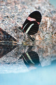 Butterfly reflection by Cheryl Cencich