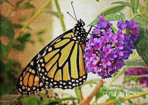 Butterfly So Content by Lydia Holly