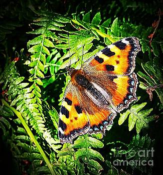 Butterfly by Tony Black