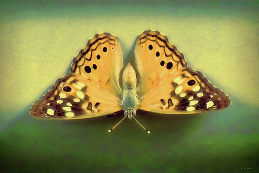 Butterfly by Tony Grider
