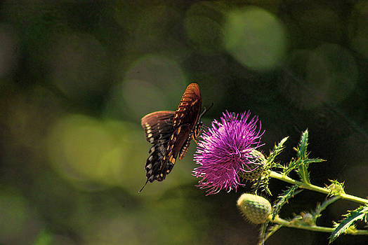 Butterfly Touch by Rick Friedle