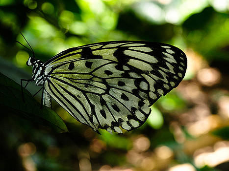 Butterfly by Valeria Donaldson