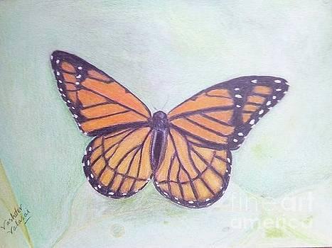 Butterfly by Vashdev Valasai