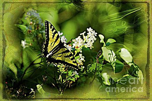 Butterfly Wall Decor by Sherman Perry