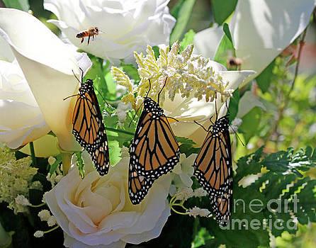 Butterfly Wedding Flowers Photo by Luana K Perez