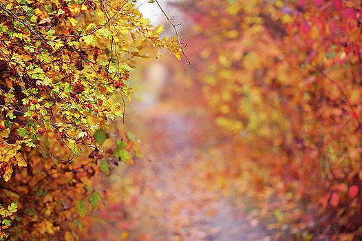 Jenny Rainbow - By Autumn Path