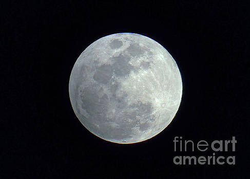 By The Light Of The Silver Moon by D Hackett