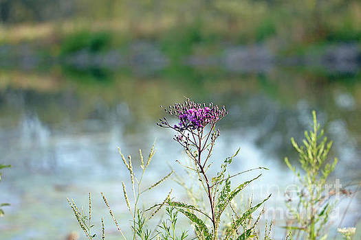 By the Pond by Lila Fisher-Wenzel