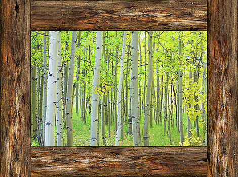 James BO Insogna - Cabin Window View Into The Woods