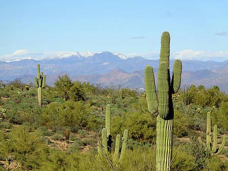 Lynda Lehmann - Cacti and Snowy Peaks