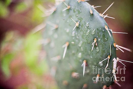 Cactus by Angelina Cornidez