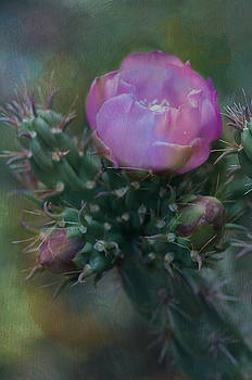 Cactus beauty by Carolyn Dalessandro