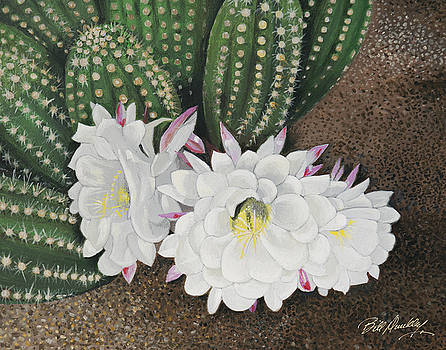 Cactus Bloom by Bill Dunkley