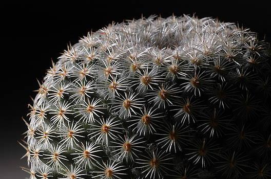 Cactus by Dave Fischer