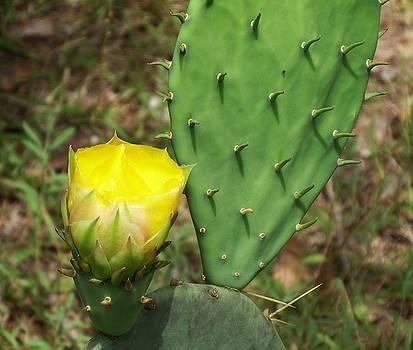 Cactus Flower by Cathy Harper