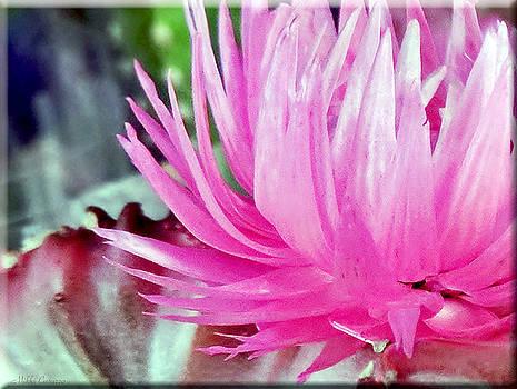 Cactus Flower by Mikki Cucuzzo