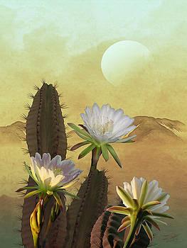 Cactus Flowers at Sunrise by Matthew Schwartz