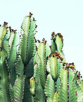 Cactus Love by Uma Gokhale