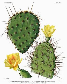 Ramneek Narang - Cactus Specie Closeup