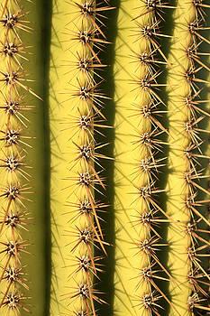 Cactus Stripes by Kathy Stanczak