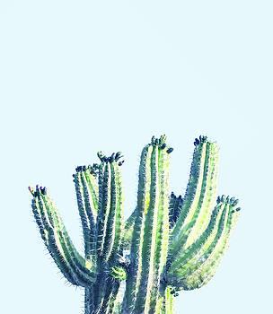 Cactus by Uma Gokhale