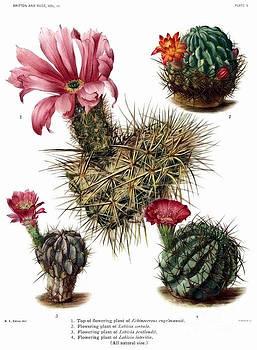 Ramneek Narang - Cactus wall art