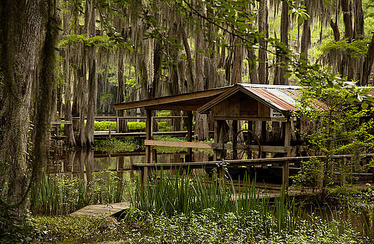 Caddo Lake Reflection by Katherine Worley