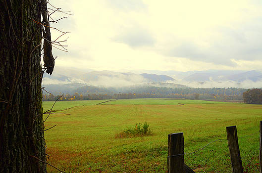 Cades cove by Charles Bacon Jr