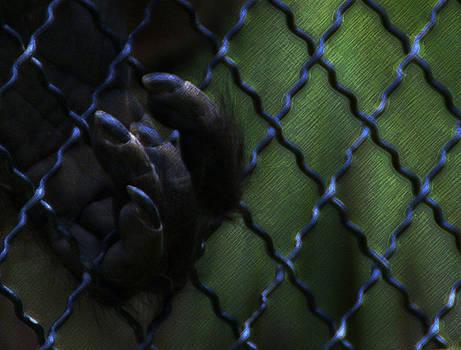 Linda Knorr Shafer - Caged