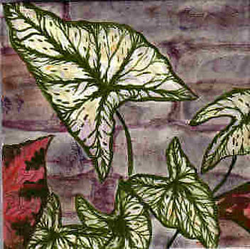 Caladiums Close Up by Dy Witt