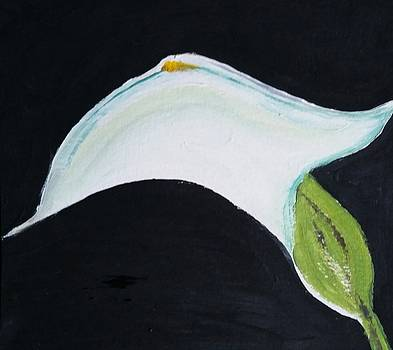 Cali Lily Pride by Carol Duarte