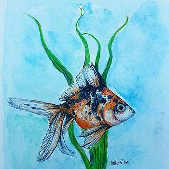 Calico Goldfish by Heather  Gillmer