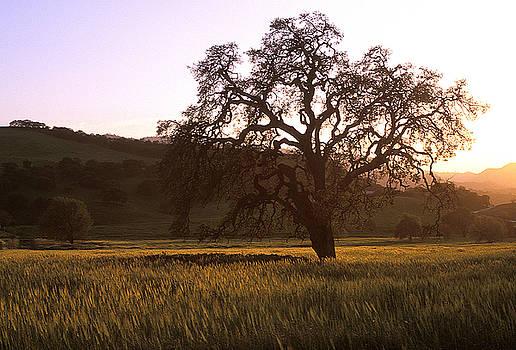 Kathy Yates - California Hwy 25 Oak