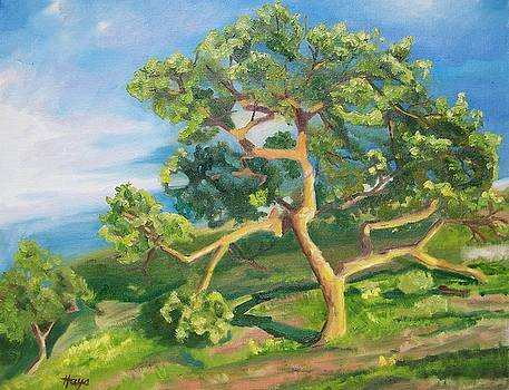 California Oak by Donna Hays