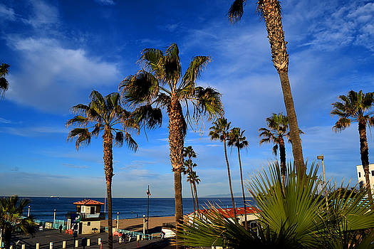 California palm trees and blue sky by Diane Lent