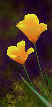 California Poppy - 3 by Thanh Thuy Nguyen