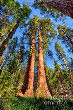 Dan Carmichael - California Redwood and Sequoia Trees AP