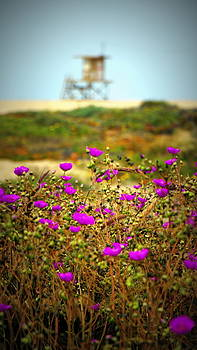 California's Wild Flower View by Laurie Pike