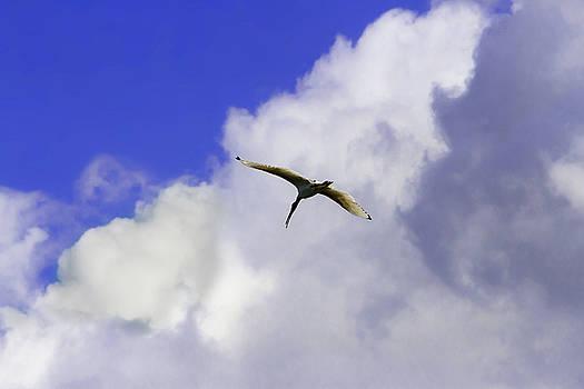 Call Of Ibis by Miroslava Jurcik