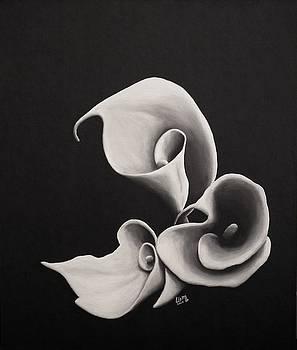 Calla lilies by Lisbeth M Sandvik