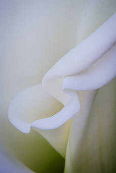 Calla Lily by Kelly McNamara