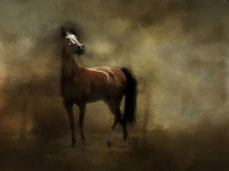 Callahan by Sue Fulton