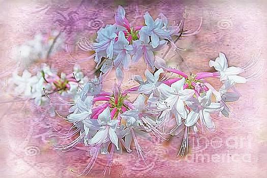 Callaway Flowers by Geraldine DeBoer