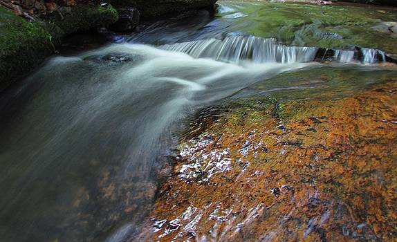 Calming Nature by Ginger Wemett