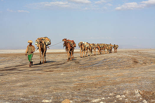 Camels Of The Afar People by Aidan Moran