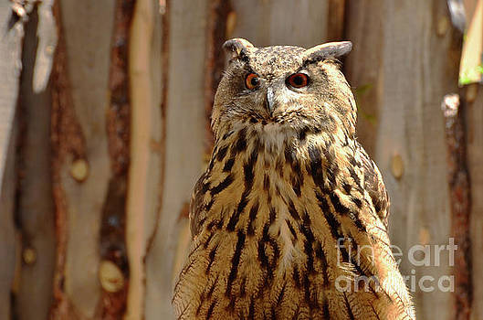 Camouflage Eagle Owl by Debby Pueschel
