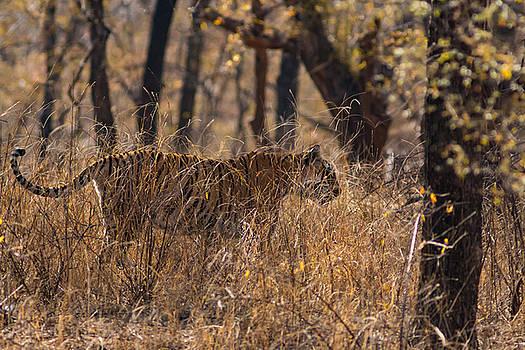 Camouflage by Ramabhadran Thirupattur