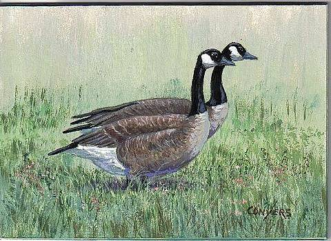 Canada Geese pair by Peggy Conyers